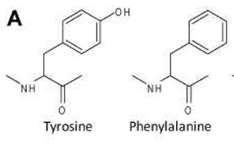 picture - amino 1