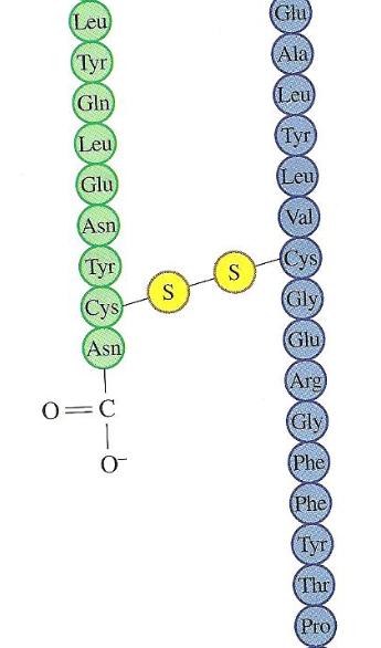 picture - amino 10