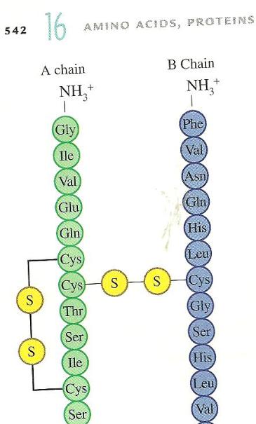 picture - amino 9