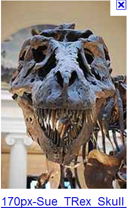 picture - t rex 1